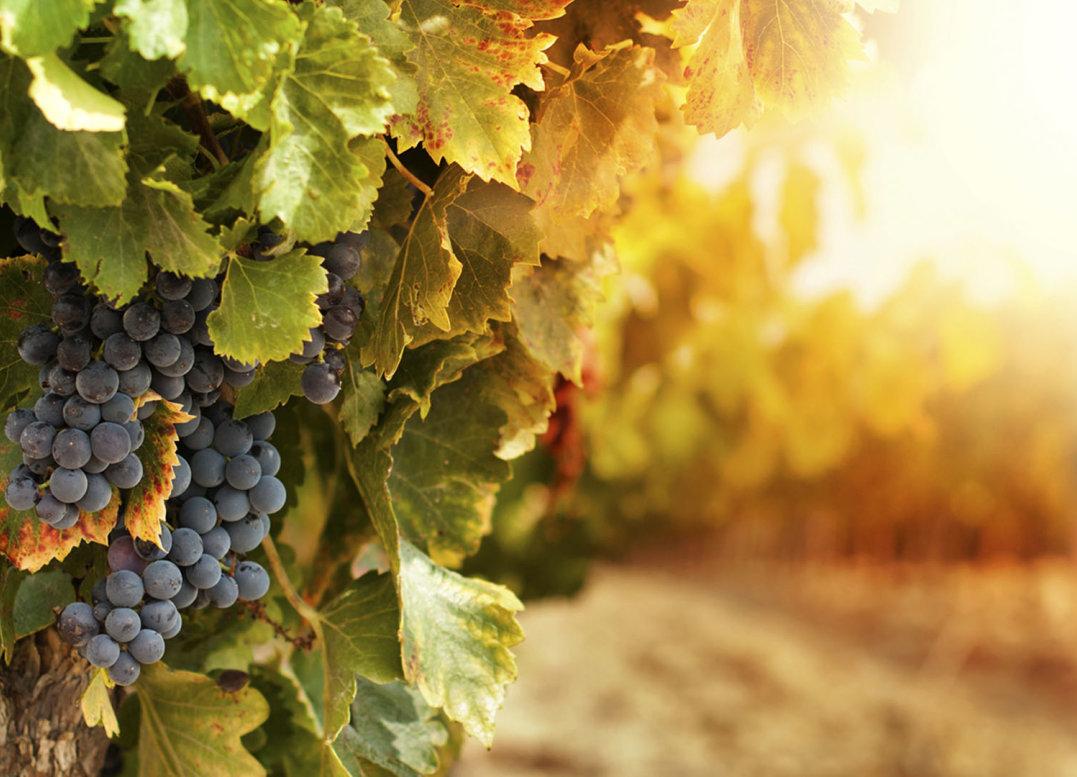 A Romantic  Wine Affaire